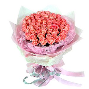 66 Pink Roses