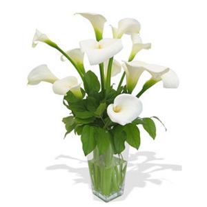 10 Callas Lily